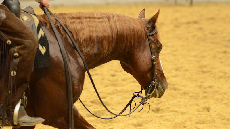 NCHA Overturns Horse Limiting Rules & Class Restructure Decision