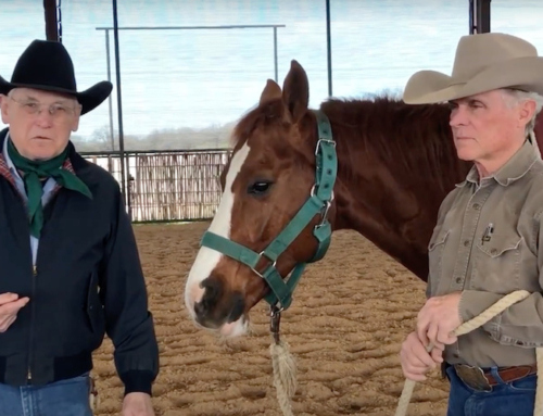 Do Right By Your Reins: Bridle & Unbridle your Cutting Horse and Hang Your Reins Correctly